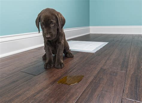 12 Reasons Hardwood Floors Might Not Be Right for Your