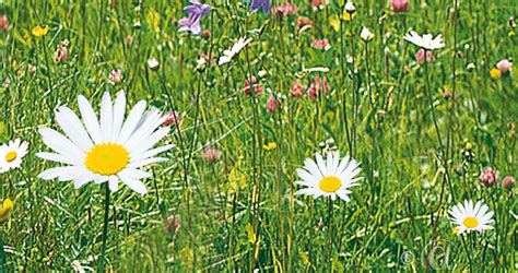 Mix, Engblomster