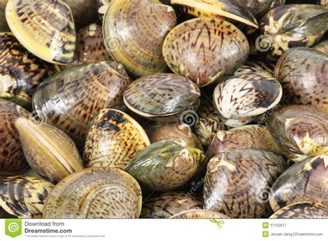 Flower clams stock image