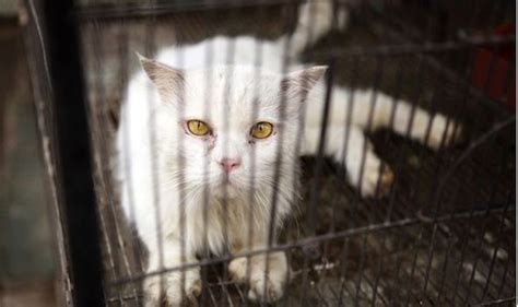 Animal rights group calls for new law - to stop Swiss