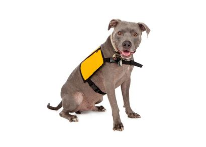 Real Service Dog or Cheap Impostor?