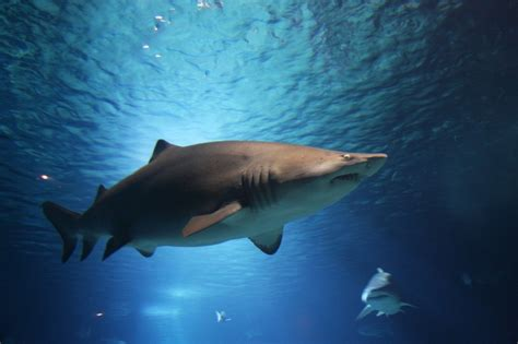 Your burning questions about sharks answered - Holiday Bug